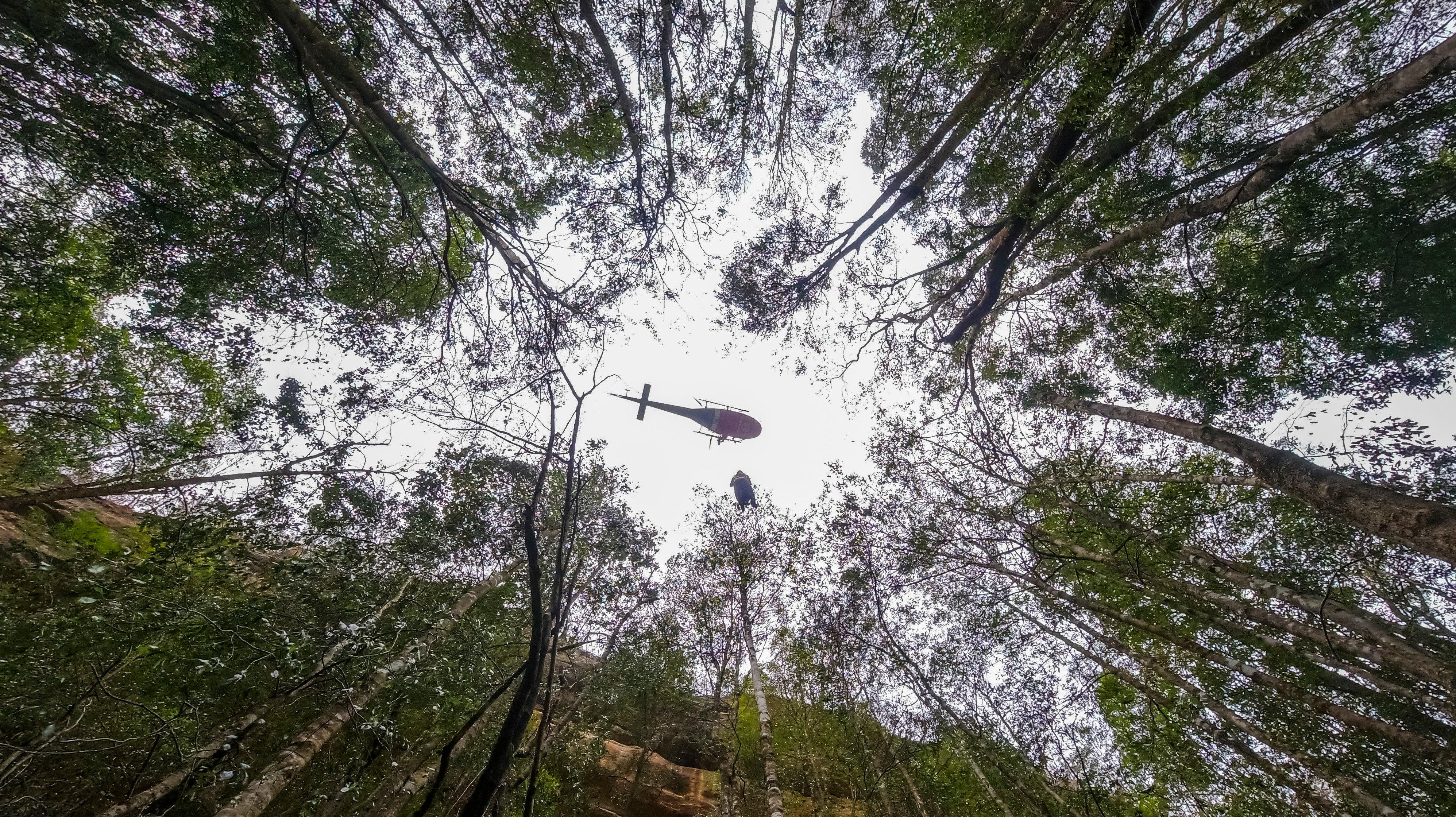 Firefighters Save Australia's Endangered 'Dinosaur Trees' From Raging Bushfires