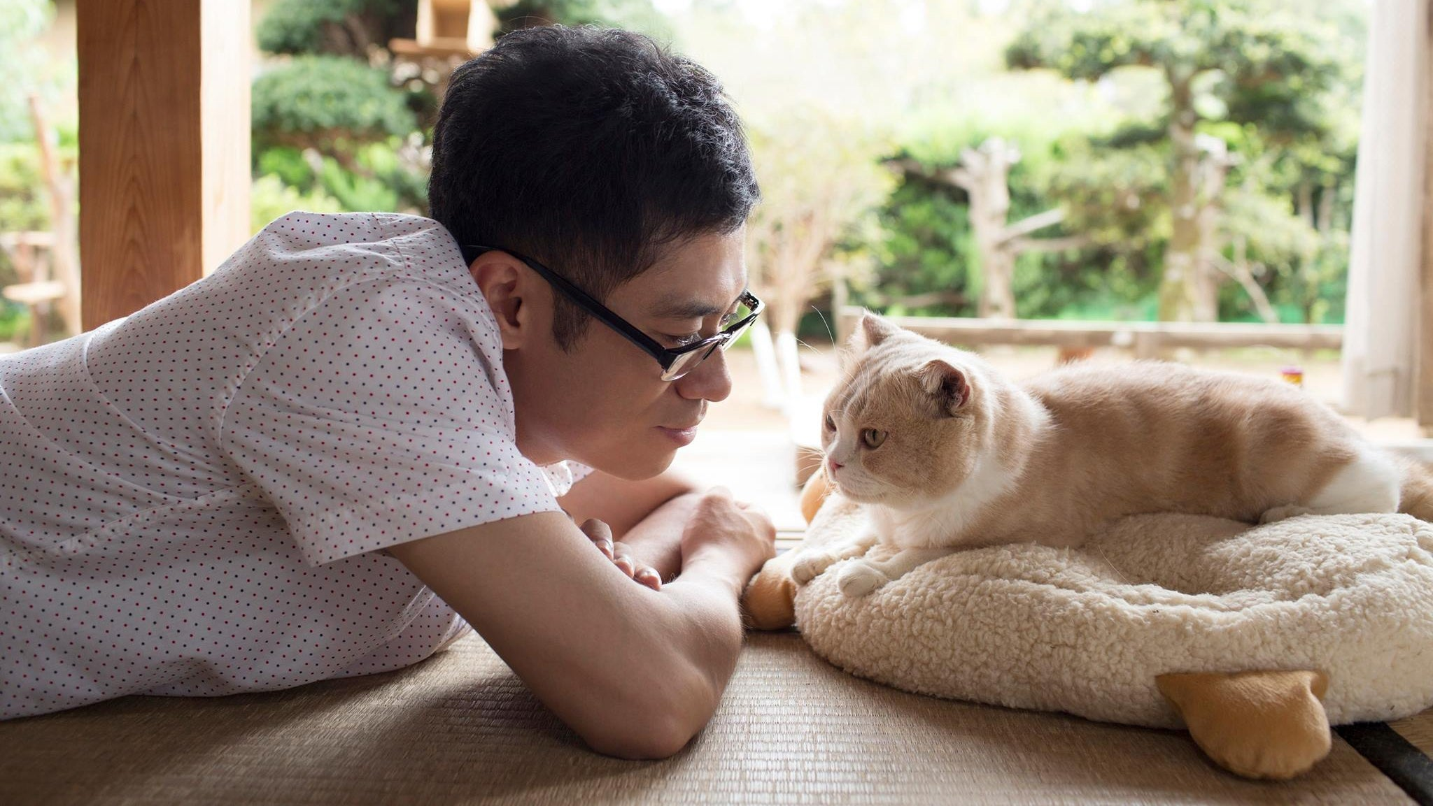 Cat Collecting Game Neko Atsume Gets A Live-Action Movie