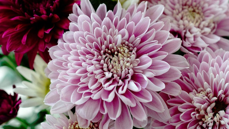 Use These Beautiful And Inexpensive Flowers In Your Next Bouquet