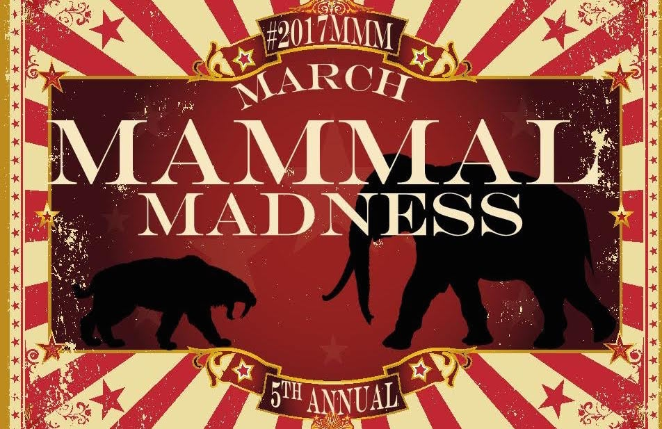 Mammals 'Battle' For Greatness In March Madness For Science Nerds