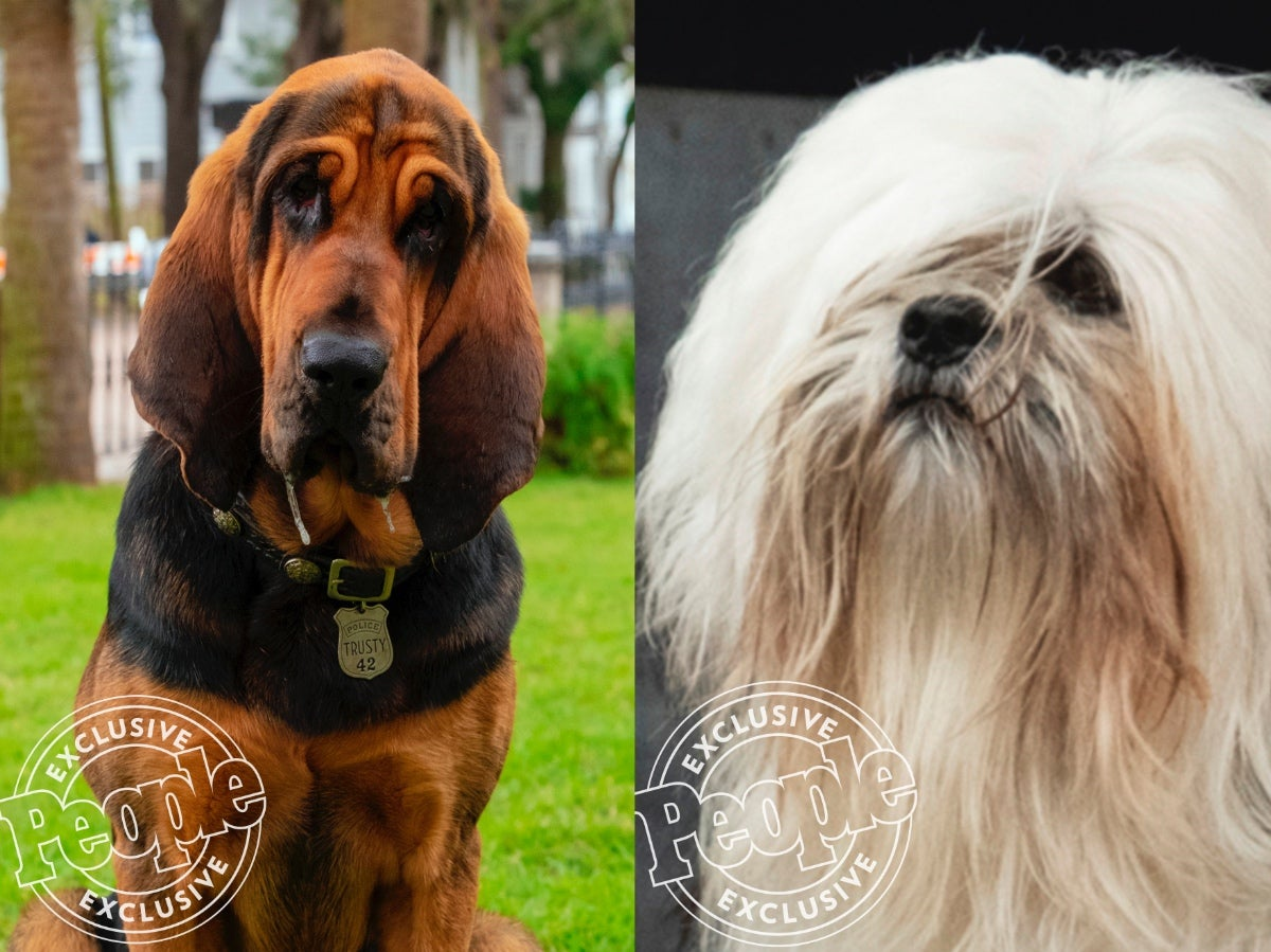 Disney Unveils The Lady And The Tramp Remake S Real Life Good Doggos