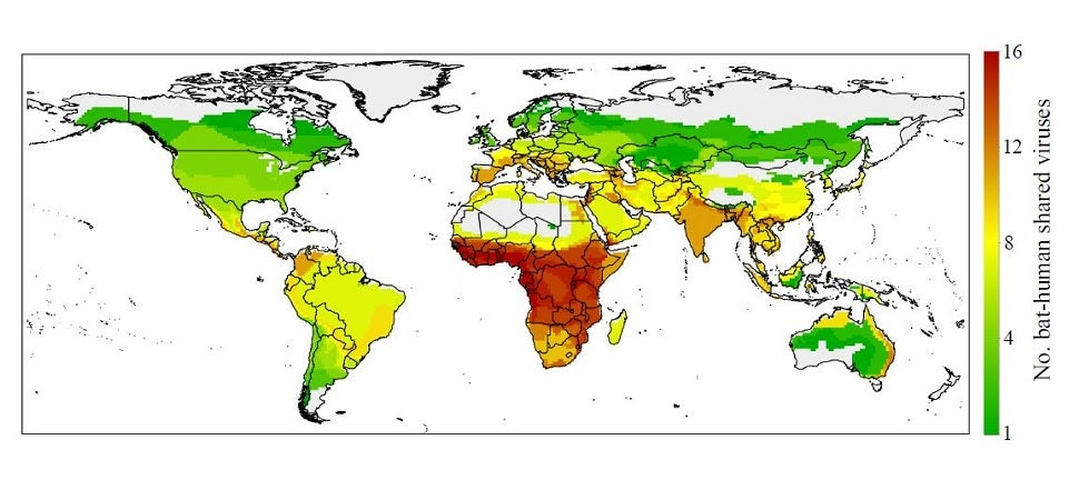 New Maps Identify Possible Hot Spots for Bat-Transmitted Diseases