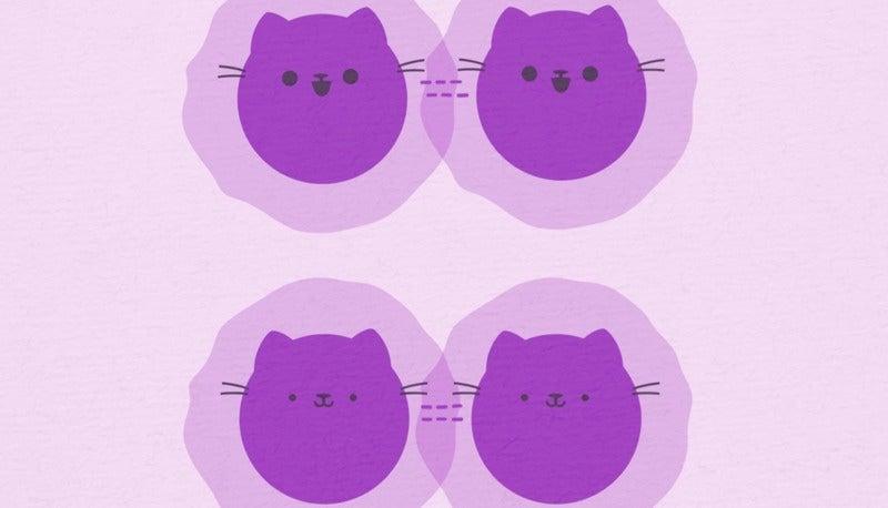 Breakthrough Quantum Cat Experiment Captured On Camera