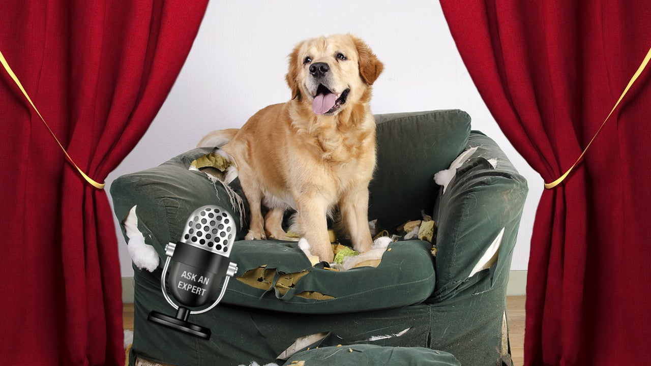 Ask An Expert All About Dog Training