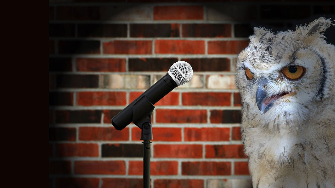 The Best Life Lessons Learnt From Stand-Up Comedians