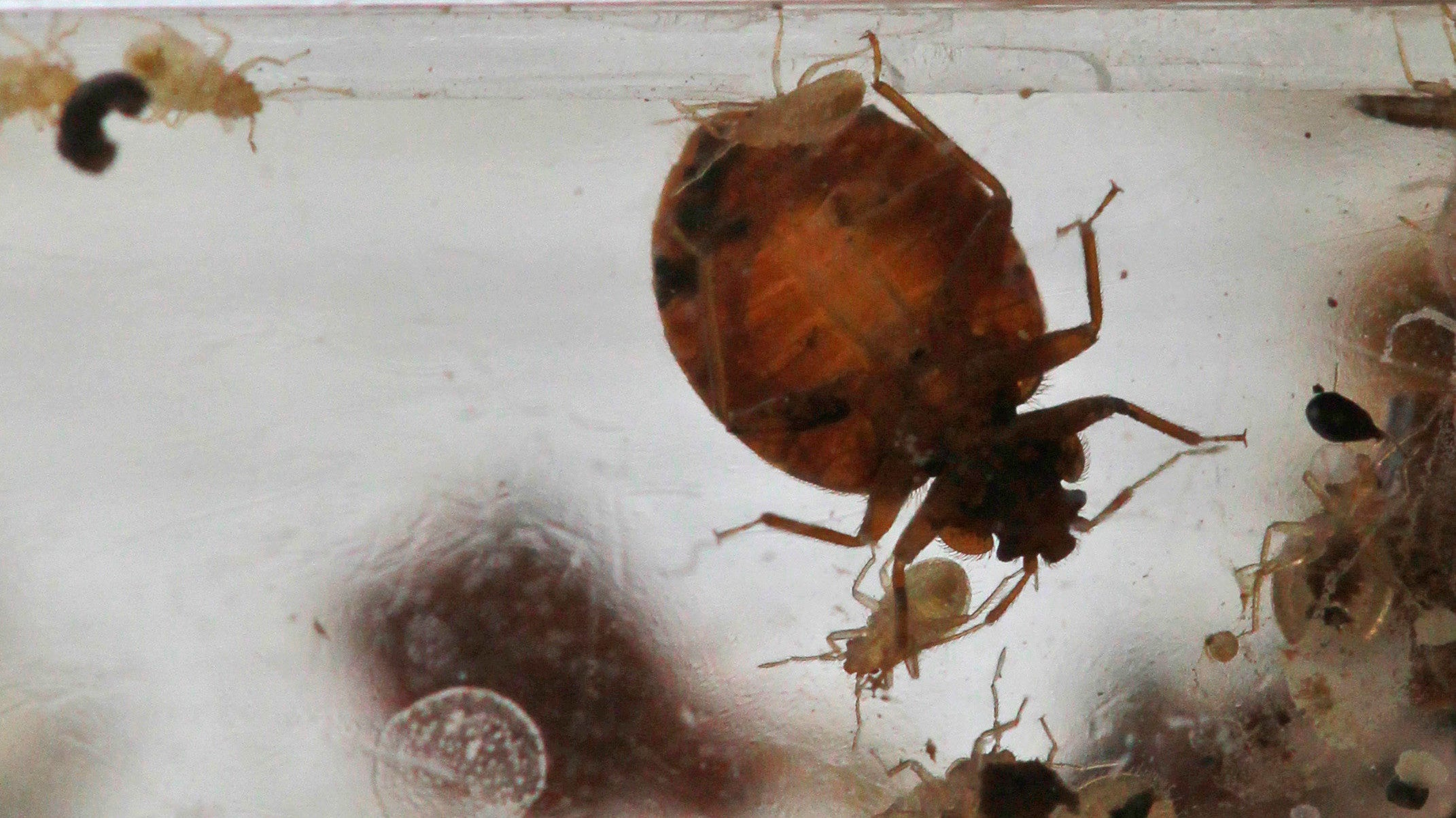 OK, Who Tried To Infest This Pennsylvania Walmart With Bed Bugs?