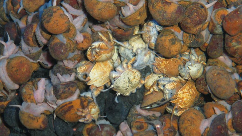 Bizarre New Deep Sea Creatures Found In Unexplored Hydrothermal Vents