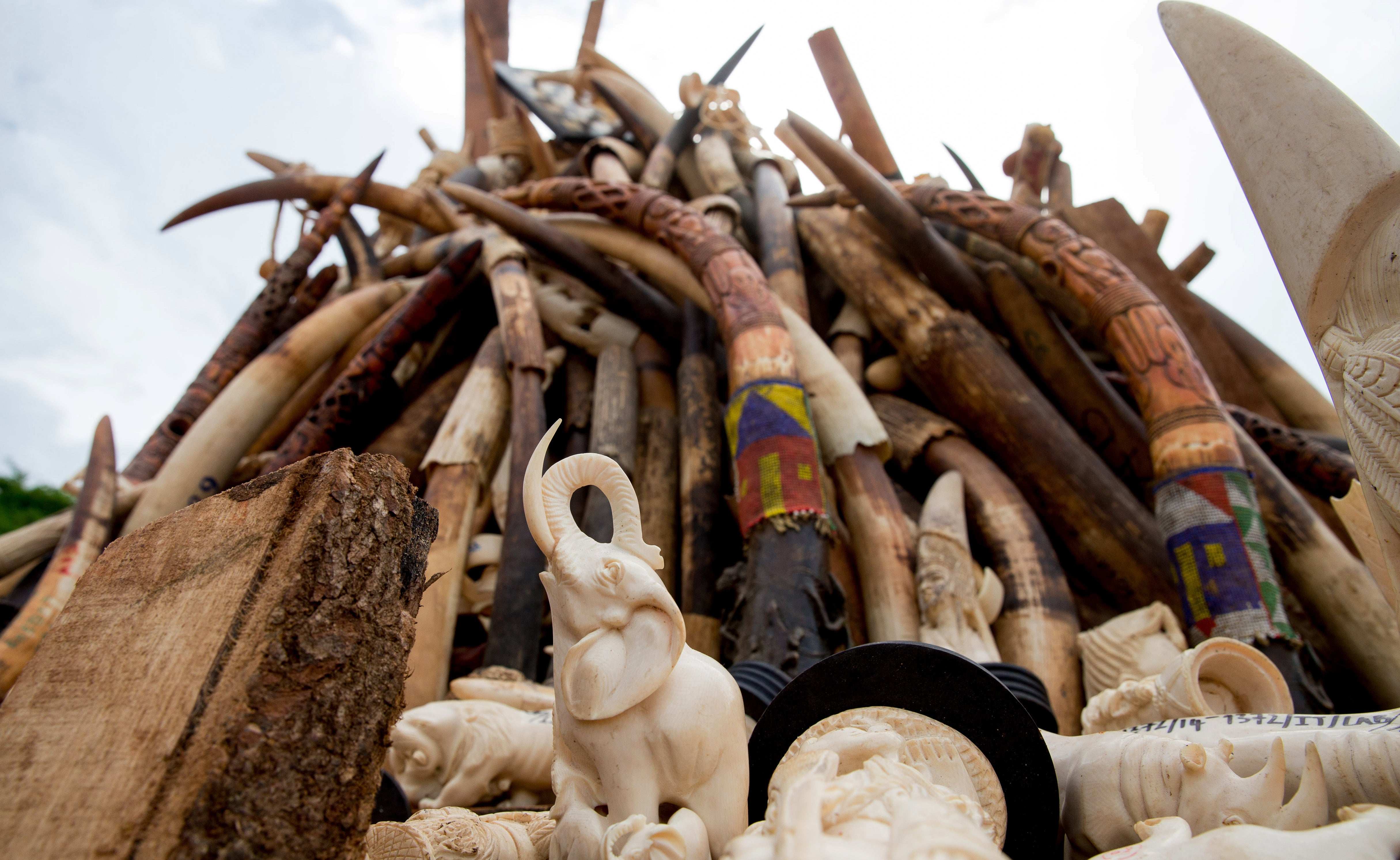 We Can Stop Arguing About Who's Fuelling The Ivory Trade