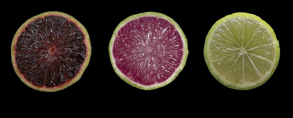 Behold the Transgenic Limes of the Future