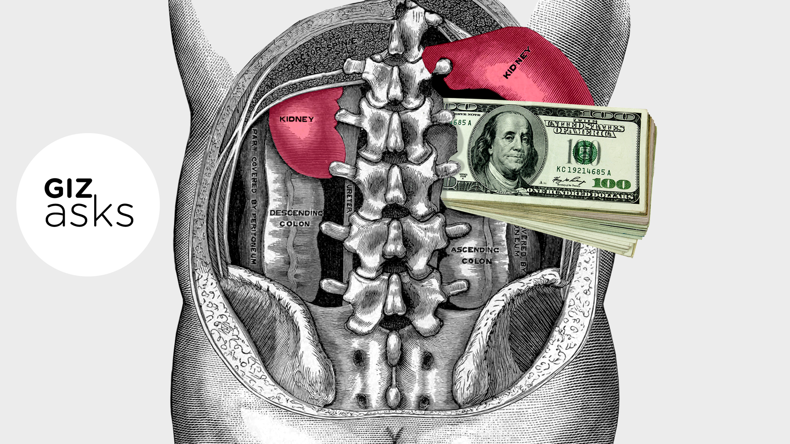 Should You Be Allowed To Sell Your Kidney?