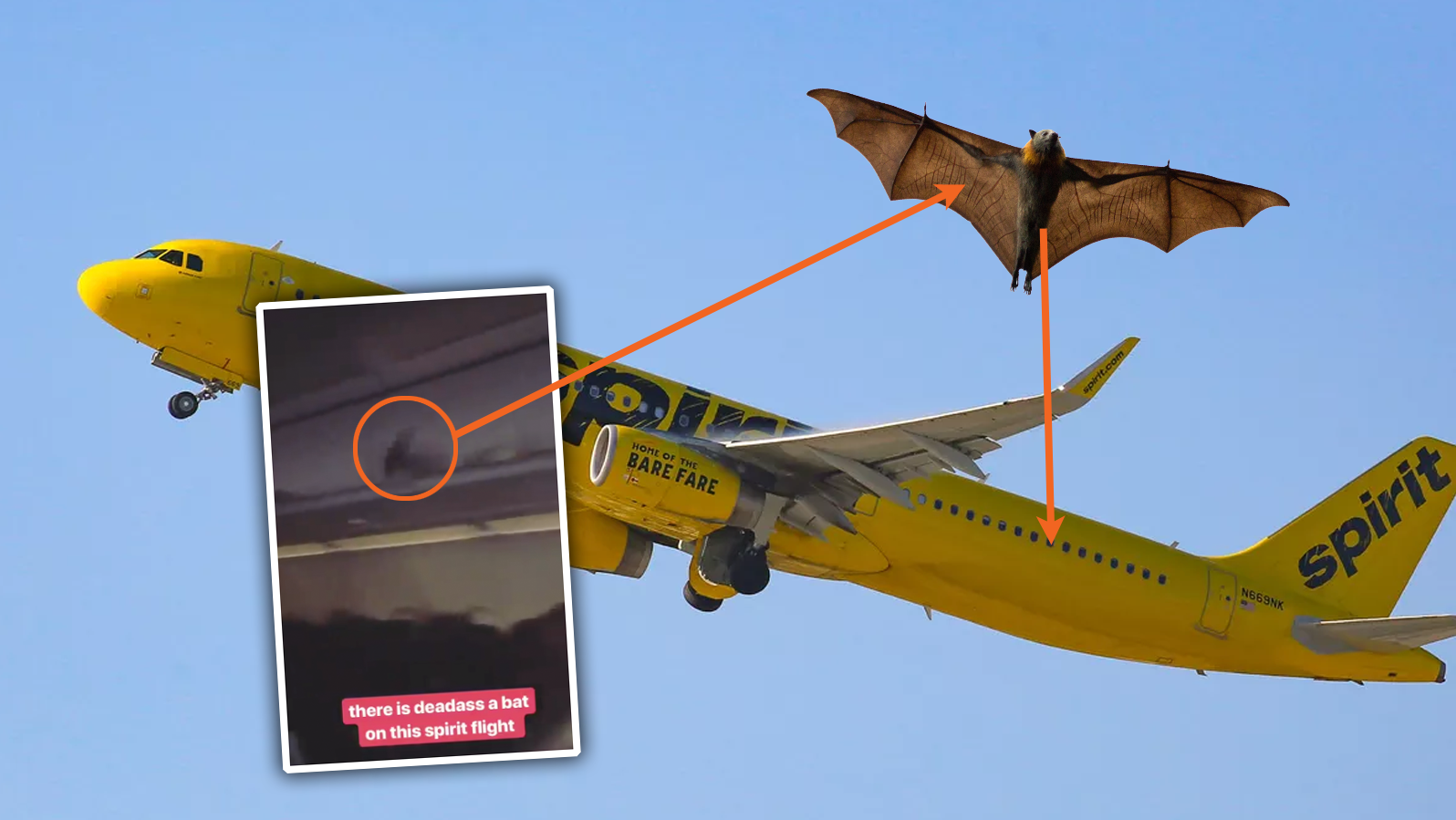There Was A Freaking Bat Flying Around Inside This Flight