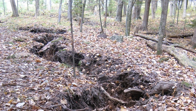 We Finally Know What Caused This Mysterious Crack in a Michigan Forest