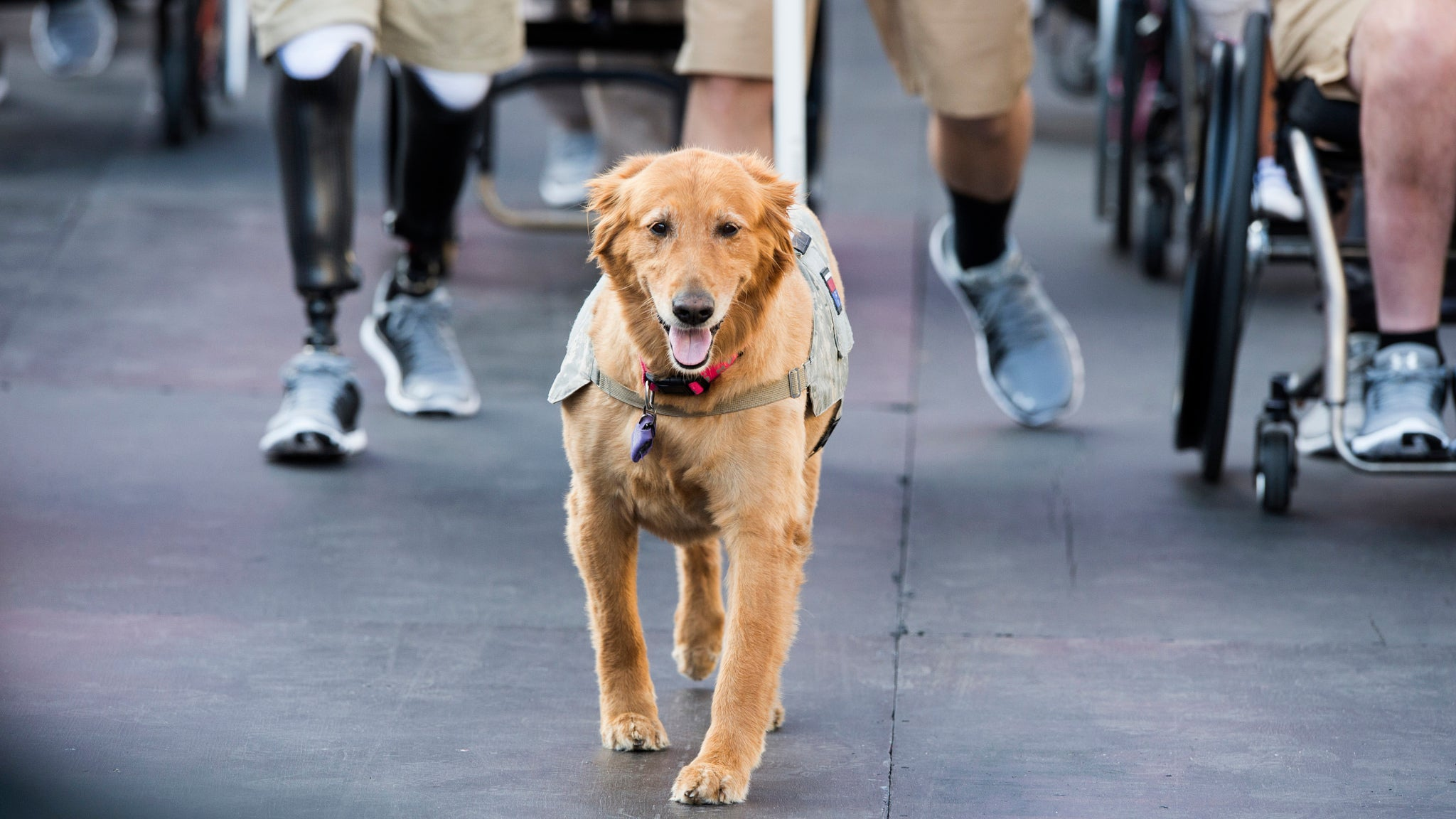 How To Greet A Service Dog