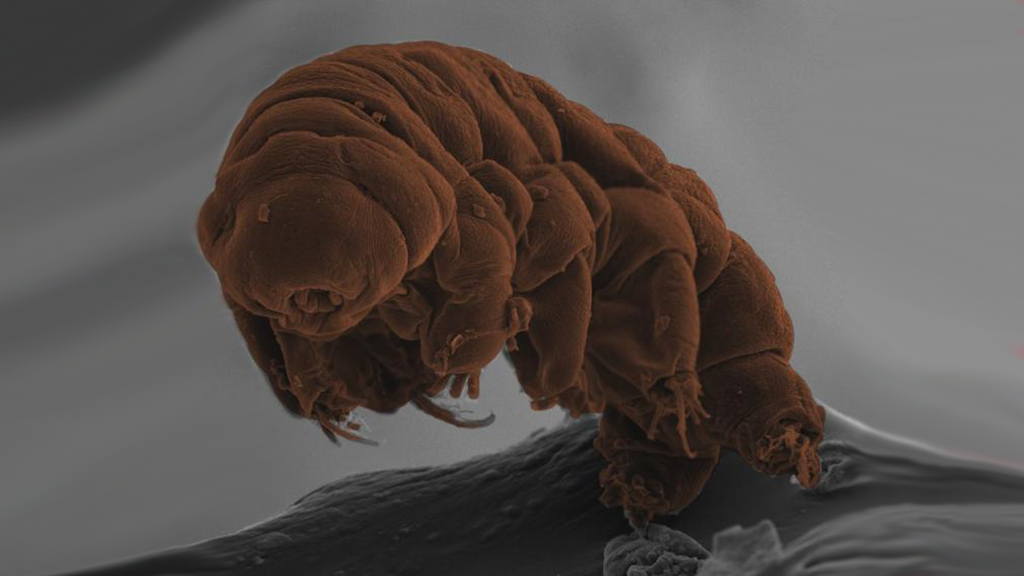 Tardigrades Are Still A Complete Evolutionary Mystery
