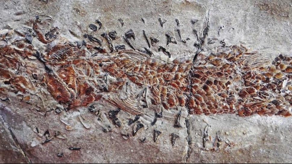 Dramatic Fossil Shows A Squid-Like Creature Crushing A Fish In Its Jaws