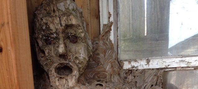 Oh god, this giant fused hornet's nest looks like it swallowed a human