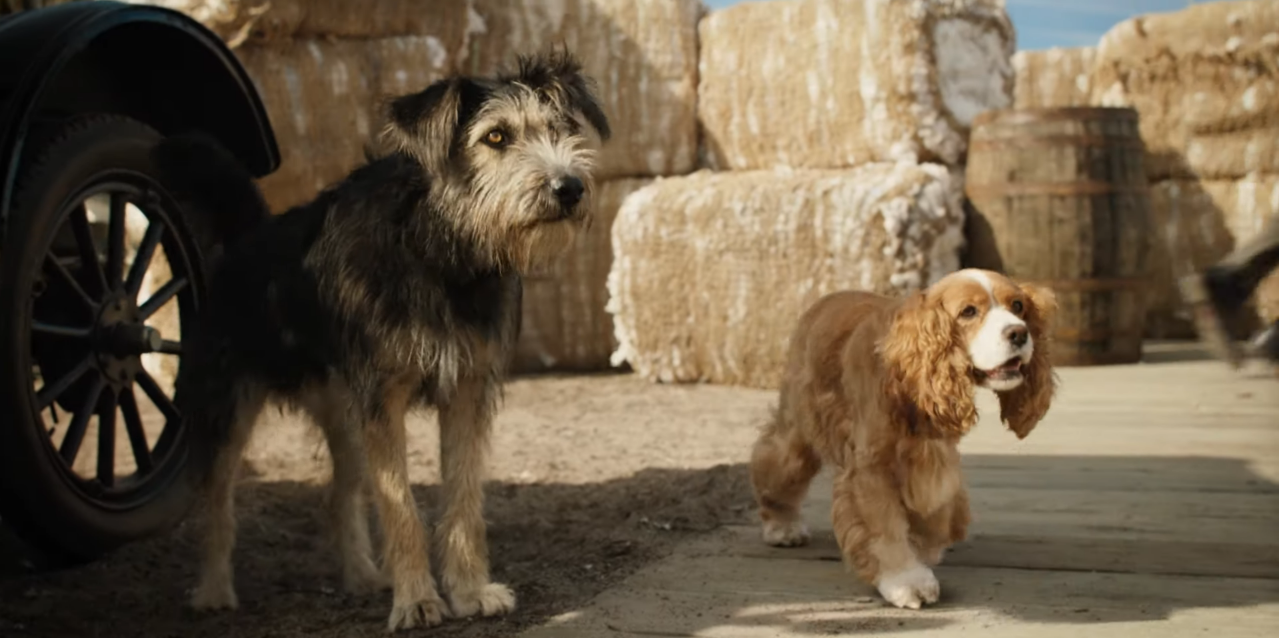 Star-Crossed Puppers Shine In The Adorable First Trailer For Disney's Live-Action Lady And The Tramp Remake