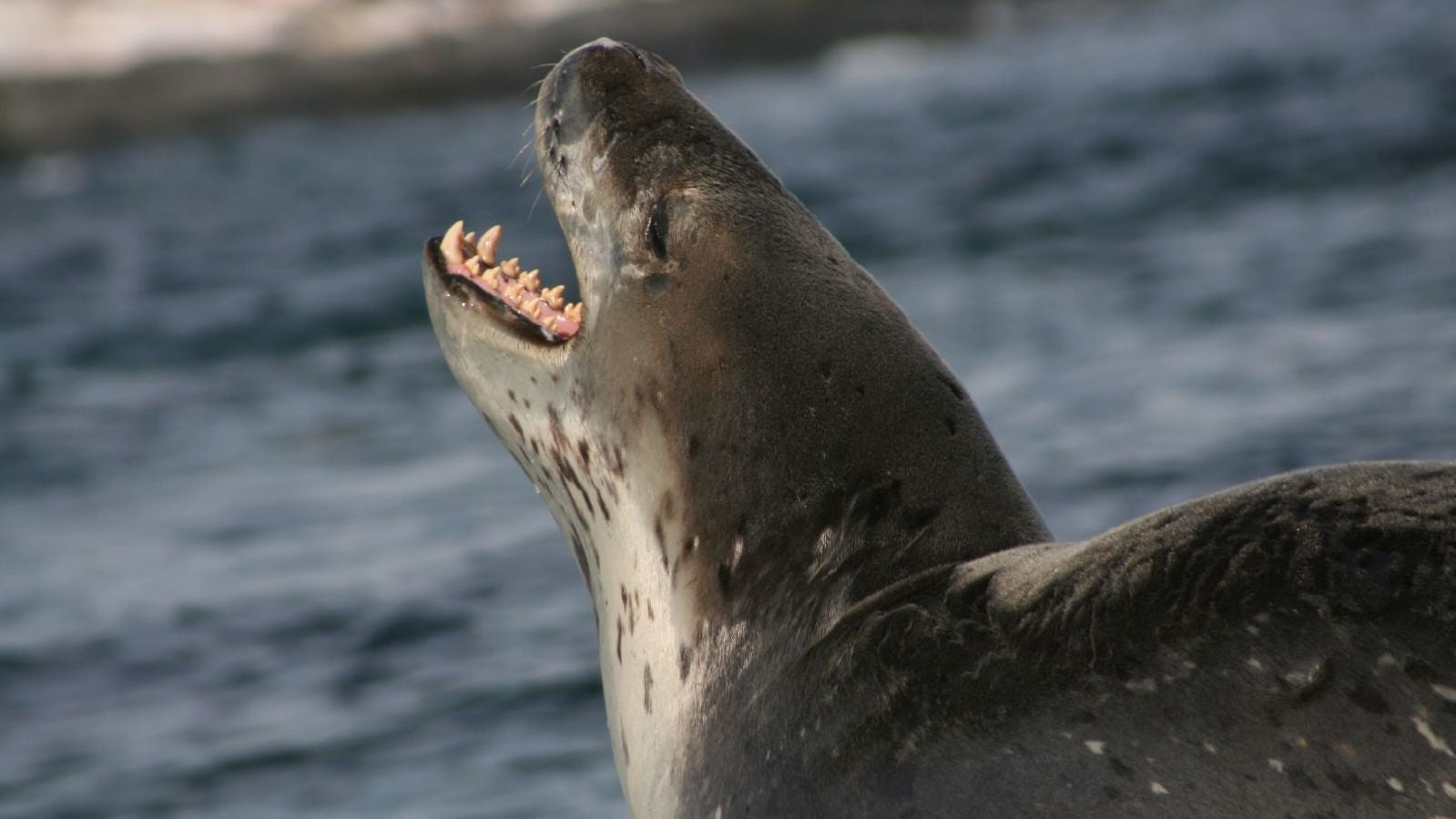 Seal Poop Thumb Drive Mystery (Partially) Solved As Owner Steps Forward