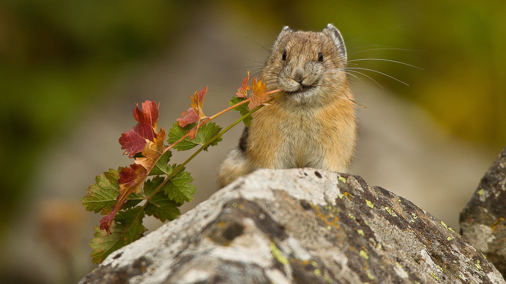 Adorable Animal Subsisting On Wildflowers And Kindness Is In Serious Danger