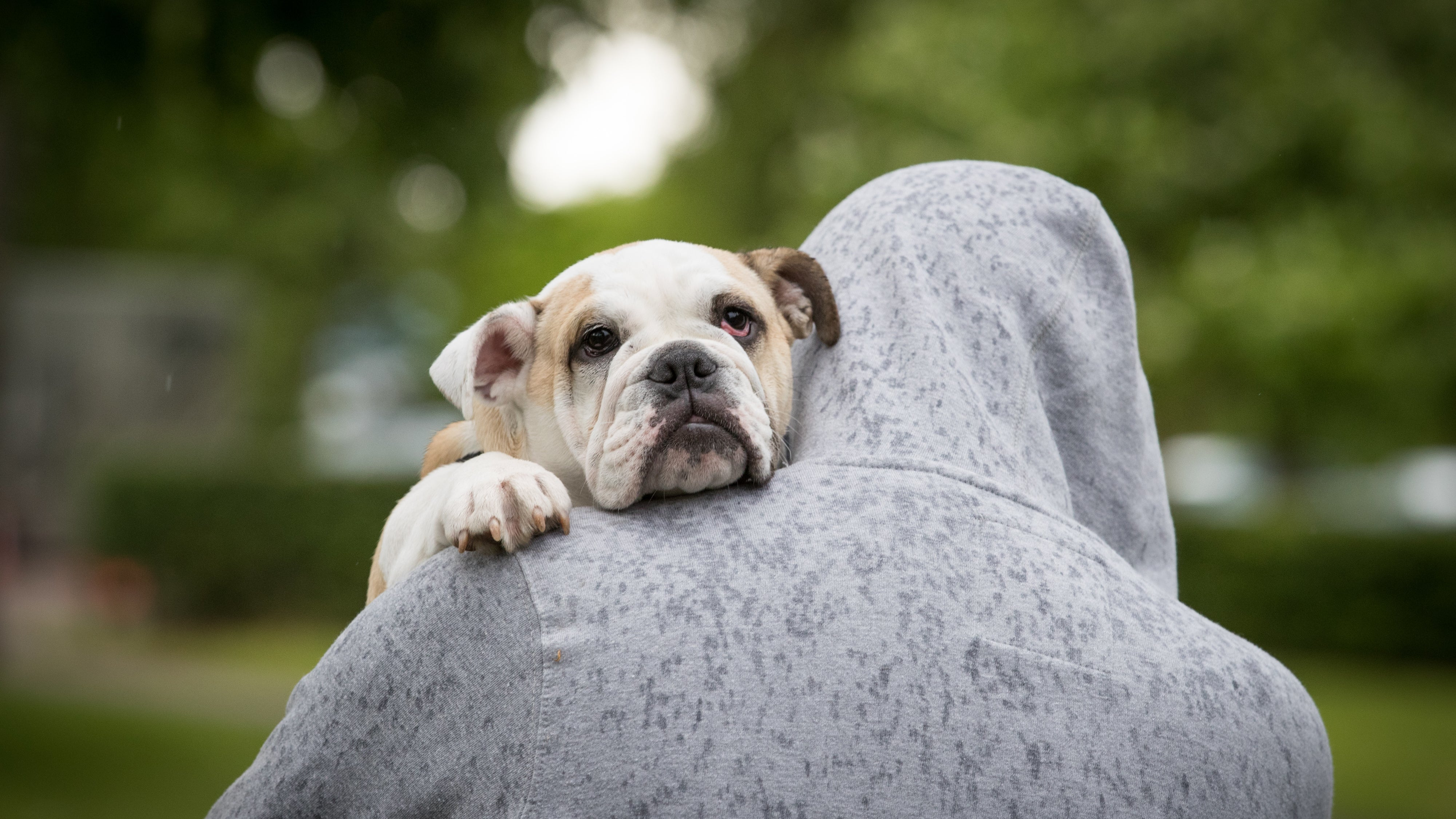How To Keep Your Dog From Destroying The Environment