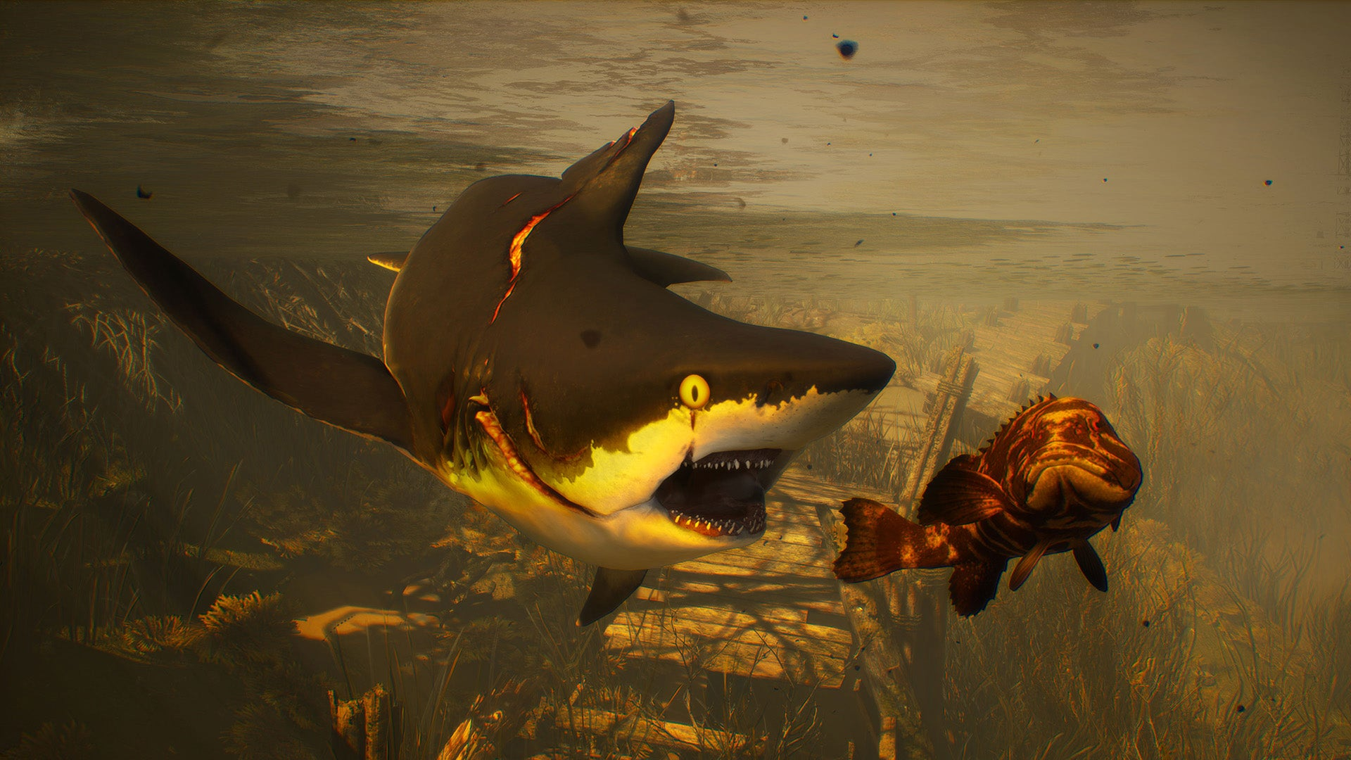 The Best Video Games Starring Sharks