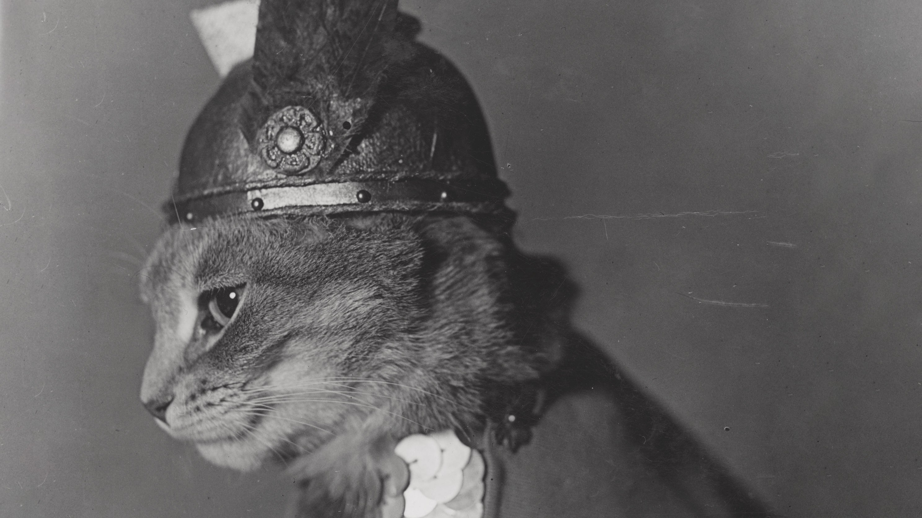 Ogle These Vintage Public-Domain Cat Pictures From The US Library Of Congress