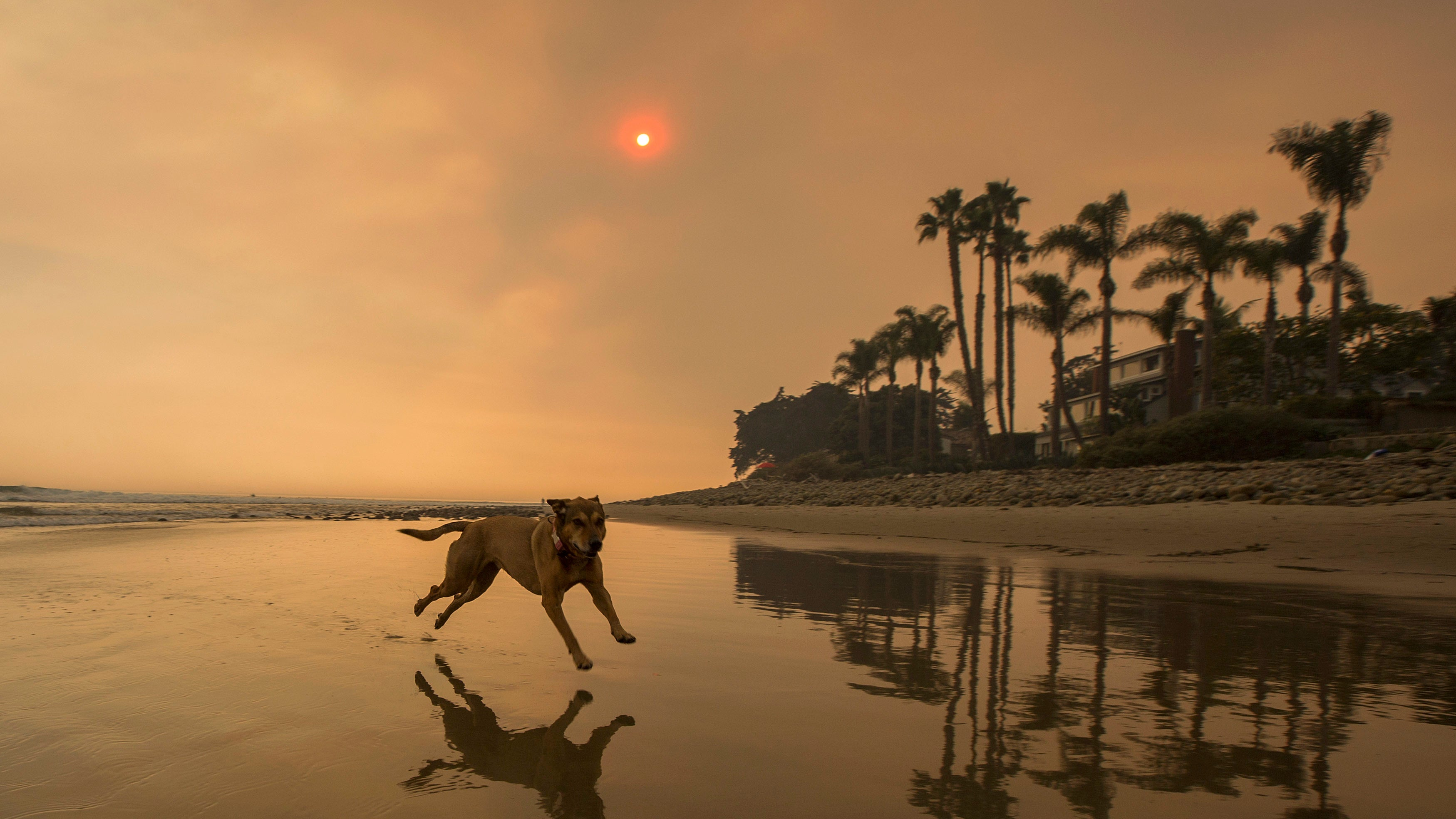 How To Protect Your Pets From Bush Fire Smoke