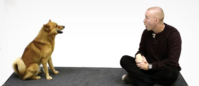 How dogs react when a human dog impersonator barks at them