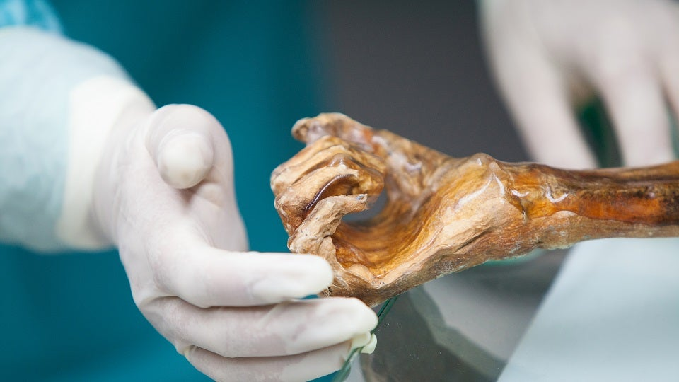 Ötzi the Iceman's Gut Bacteria Can Help Us Trace Early Human Migration