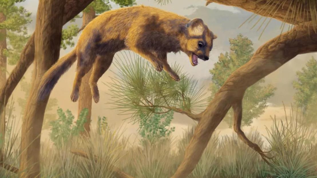 Prehistoric 'Cat' Skull Actually Belonged To An Ancestor Of Modern Wolverines