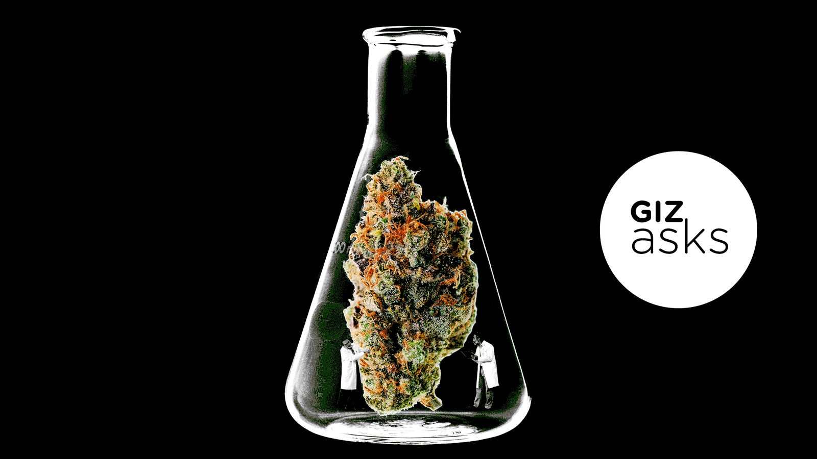 Why Is Weed Getting More Potent?