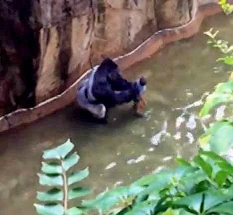 Zoos Suck For Both Animals and Humans