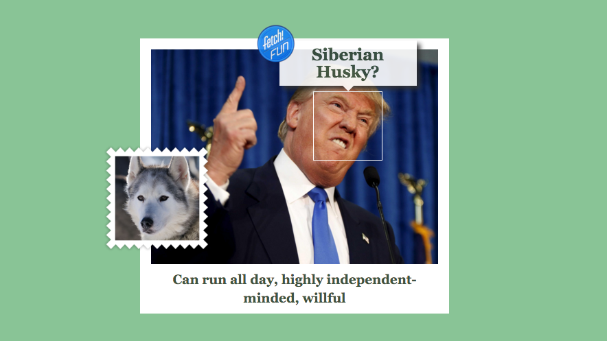 Microsoft's New What-Dog-Is-Your-Face Tool Is Good, Dumb Fun