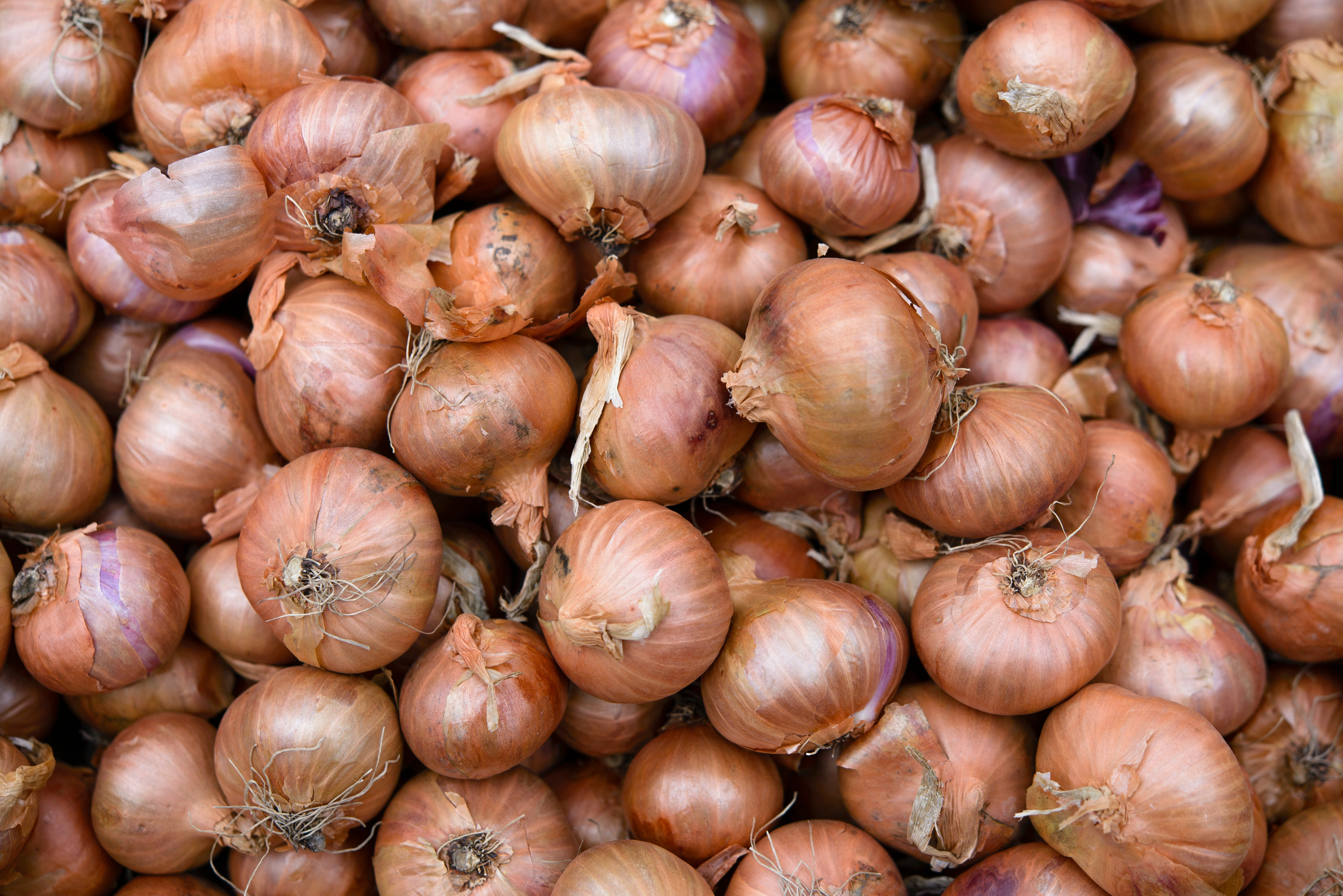 Google Is Lying To You About Onions