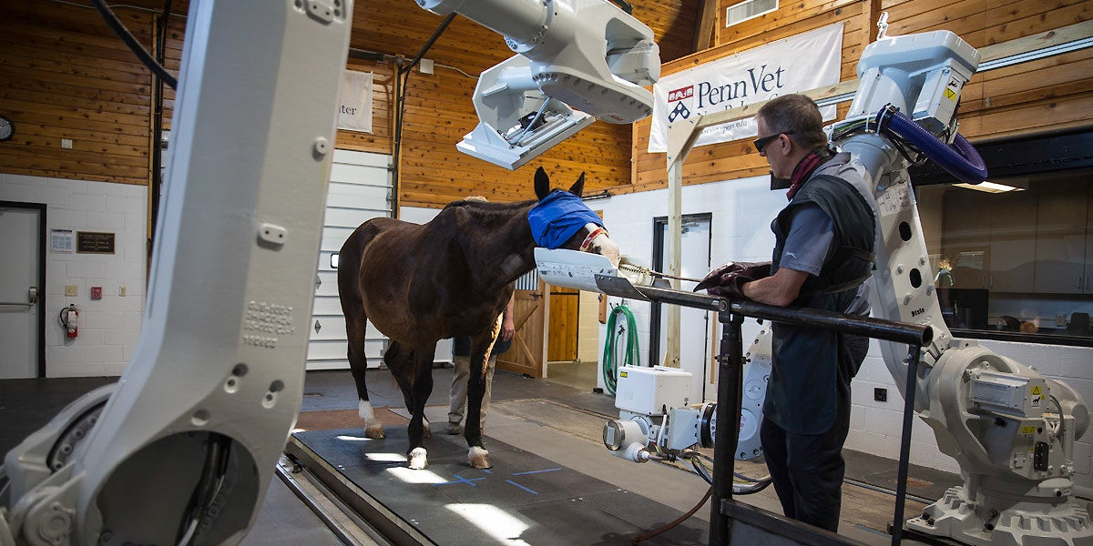 Robotic X-Rays Make Racehorses' Lives Much Easier