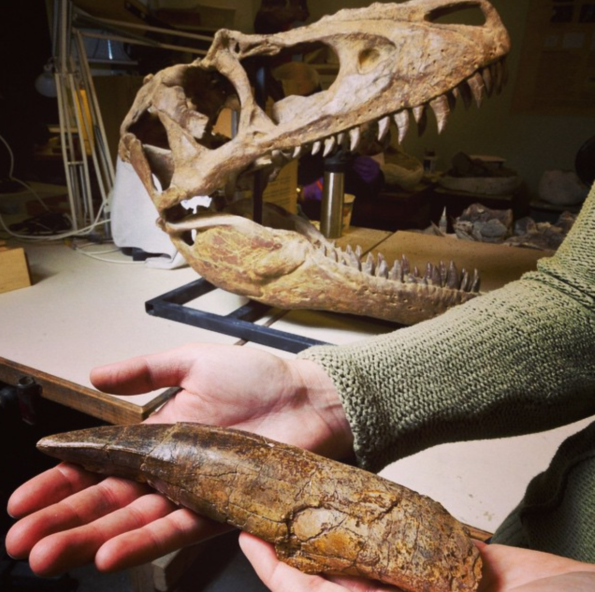 This T-Rex Fossil Is The First Dinosaur Ever To Fly To Space*