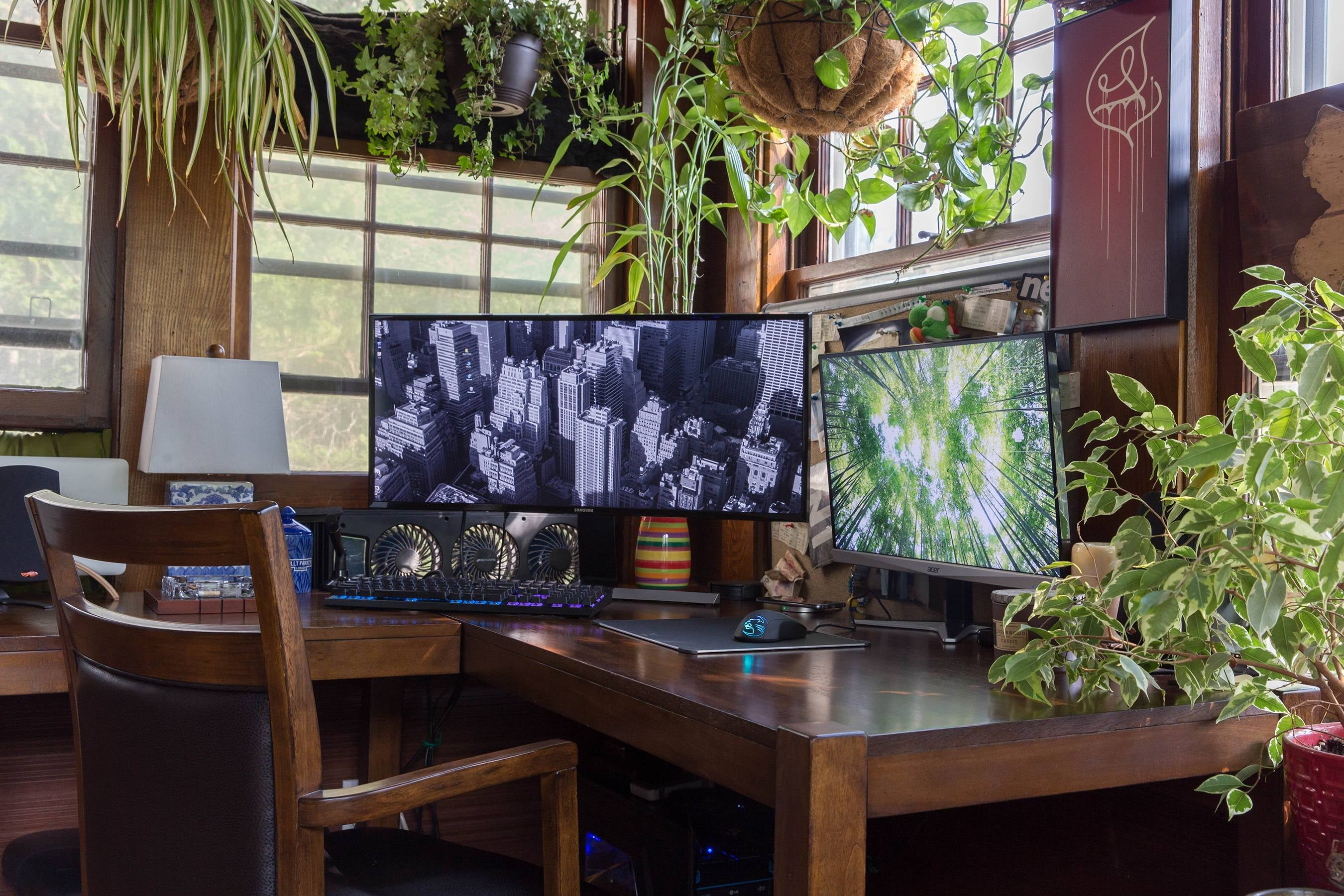 The Jungle Workspace