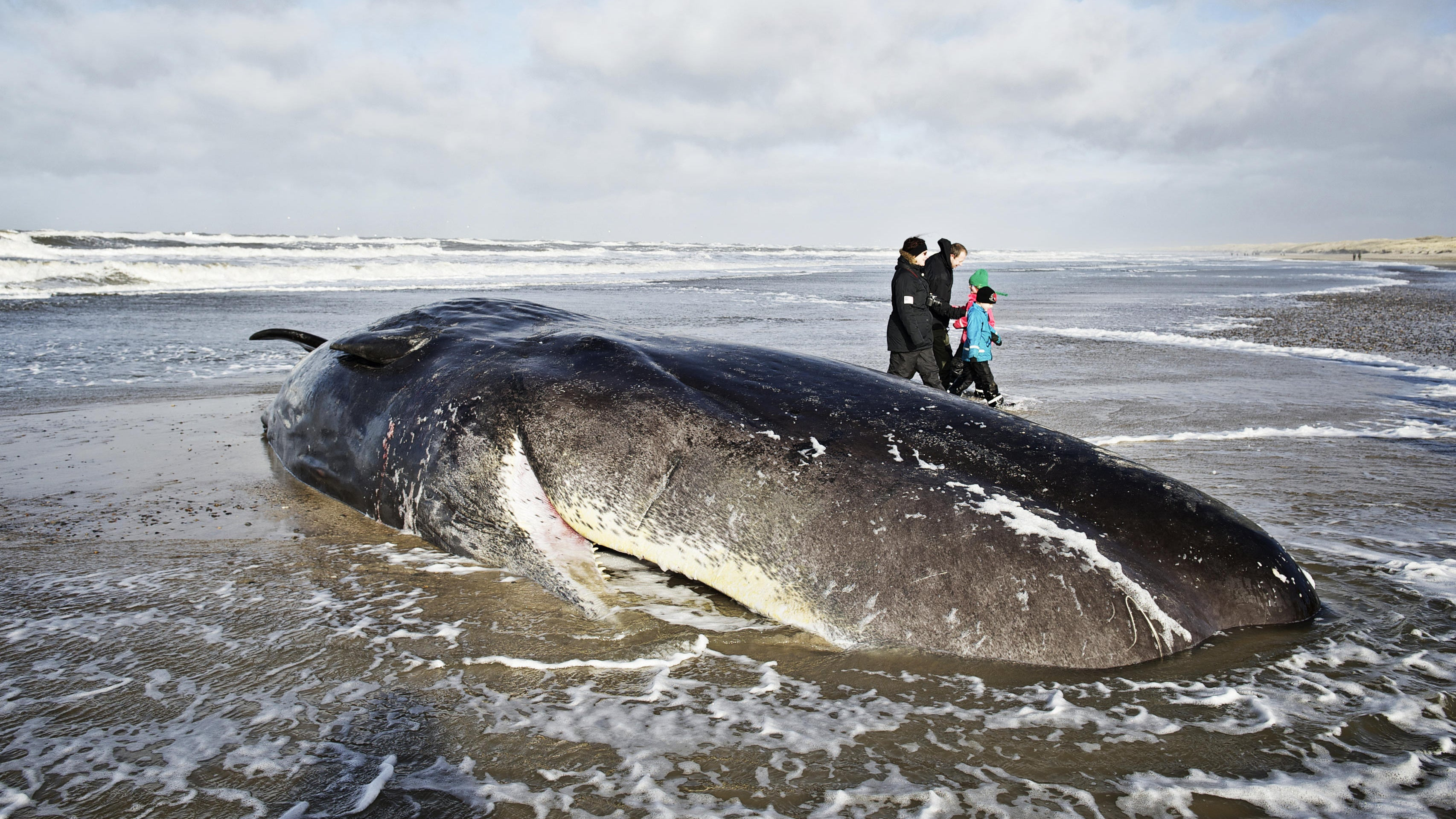 Biologists Have A Cosmic Explanation For Last Year's Mysterious Sperm Whale Strandings