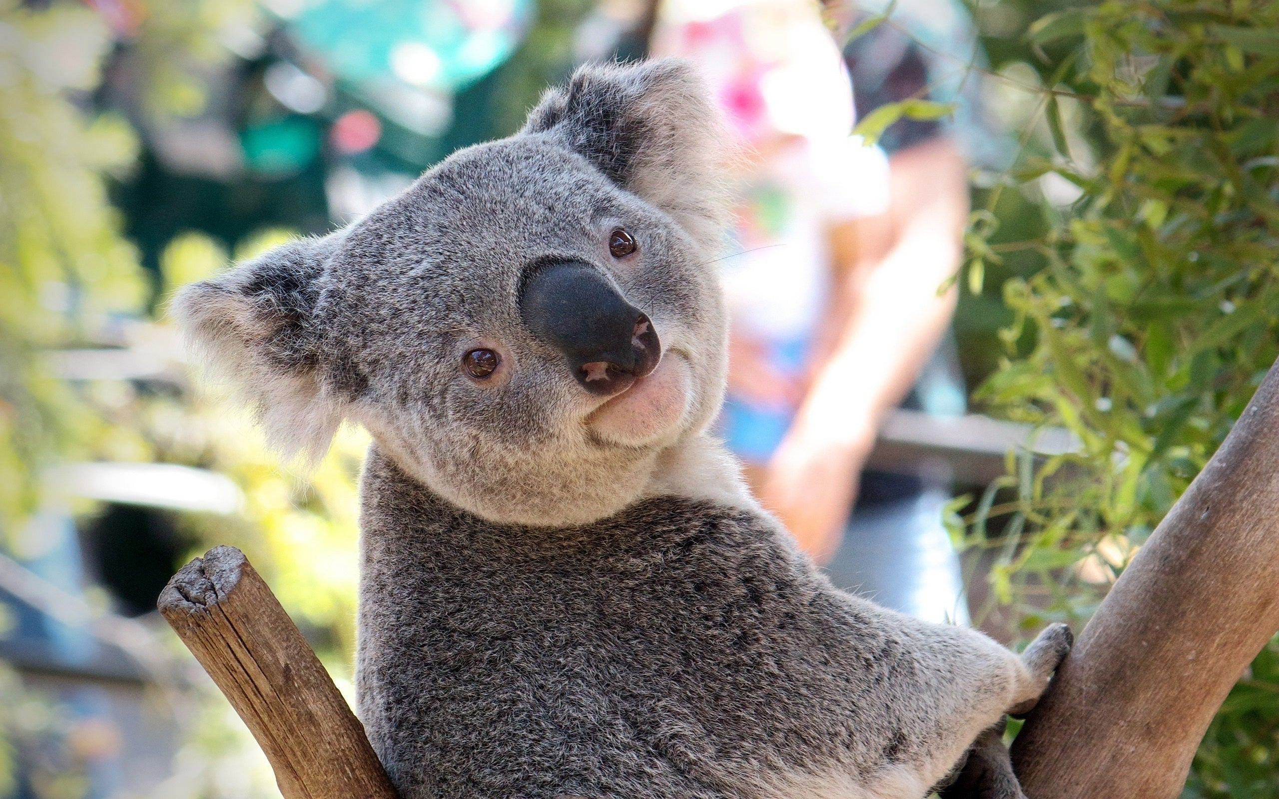 Australian Animals That Won't Kill You, Ranked