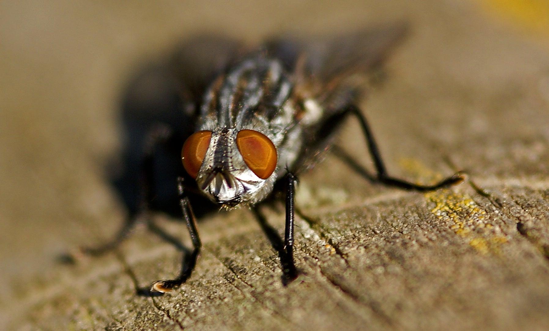 Even The Flies Inside Hospitals Carry Antibiotic-Resistant Bacteria