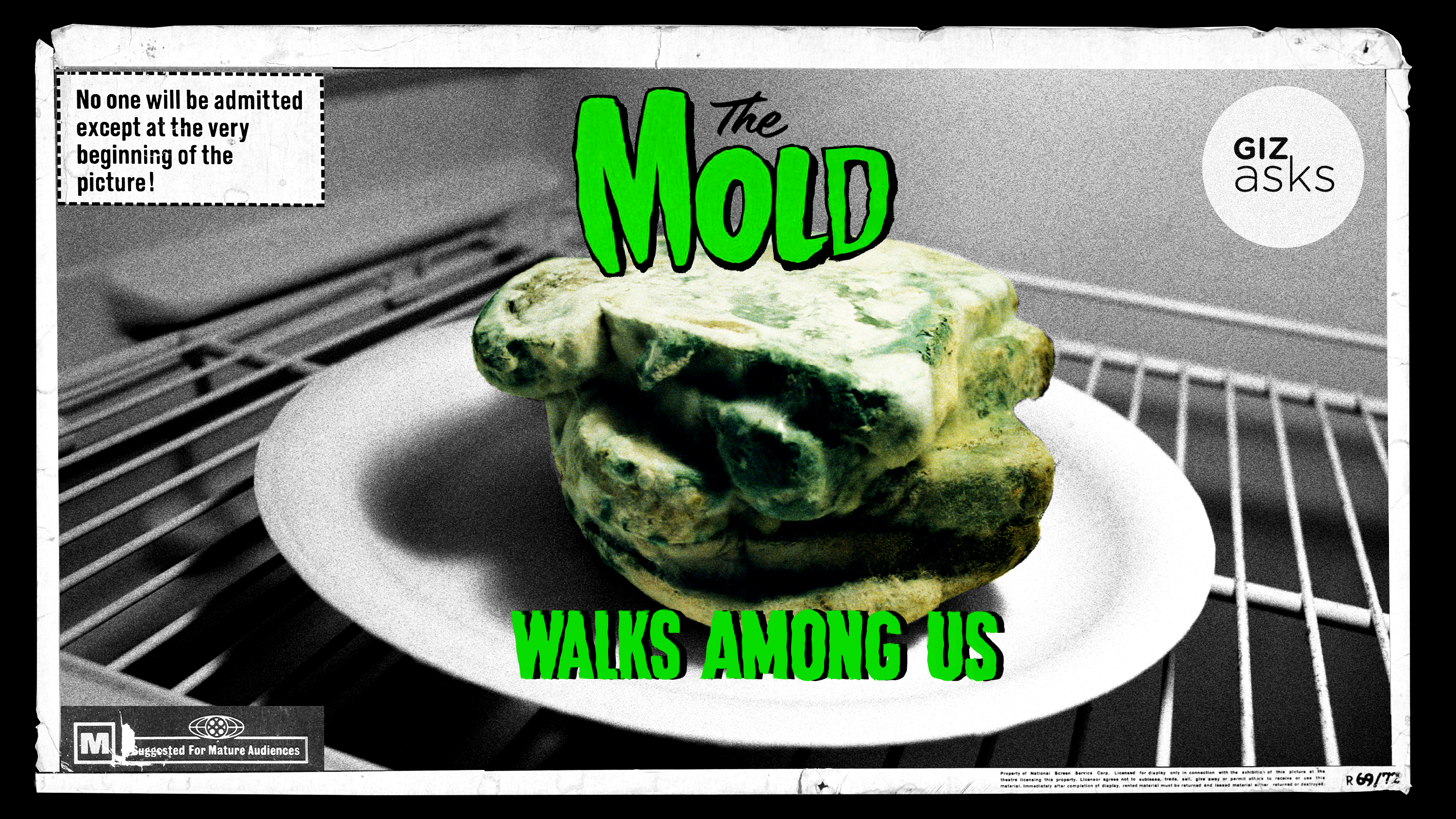 Is Mould Dangerous?