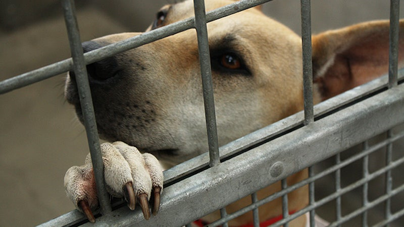 What To Do If Your Shelter Dog Isn't A Good Fit