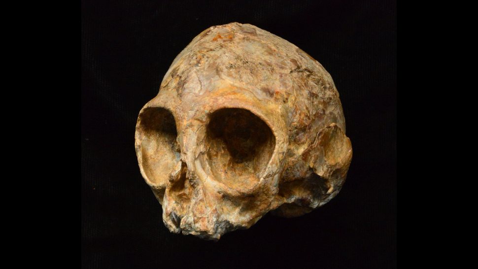 Did Scientists Just Discover The Last Common Ancestor Of All Apes?
