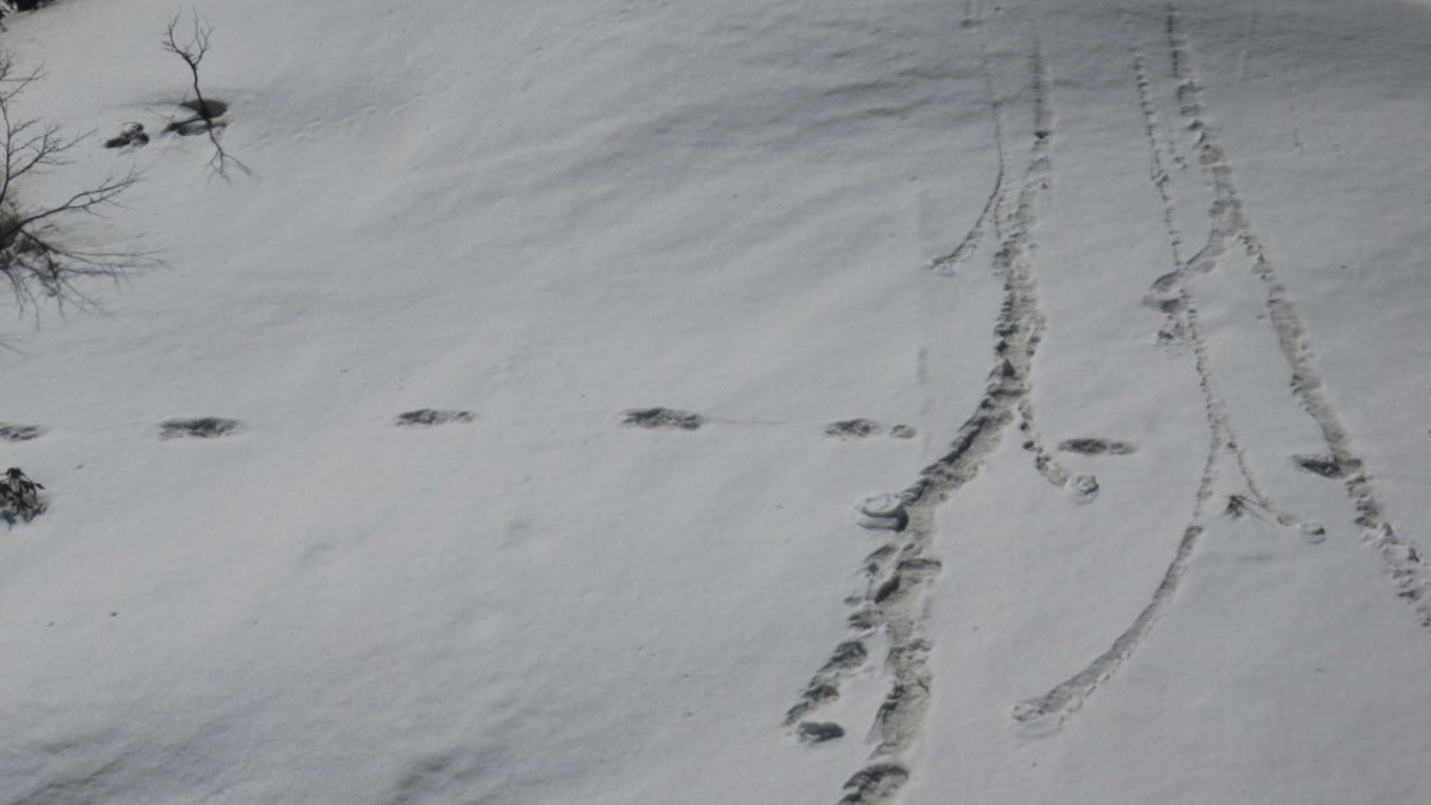 Indians Are Roasting Their Army For Posting 'Evidence' Of A One-Footed Yeti On Twitter