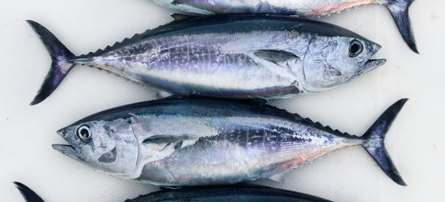 The Plan to Save Bluefin Tuna By Using Science to Farm It On Land