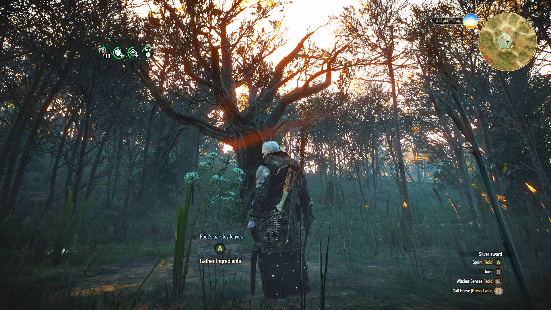 My Quest To Find A Special Tree In The Witcher 3