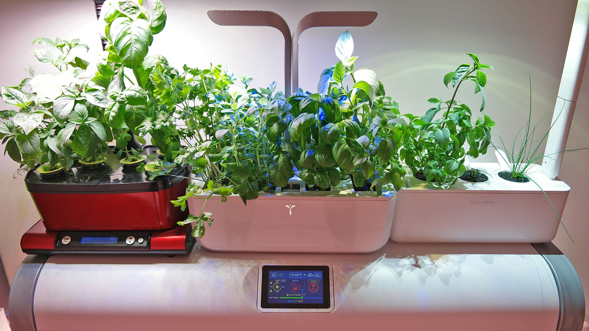 How Transforming My Apartment Into An Indoor Farm Turned Into A Very Bad Idea