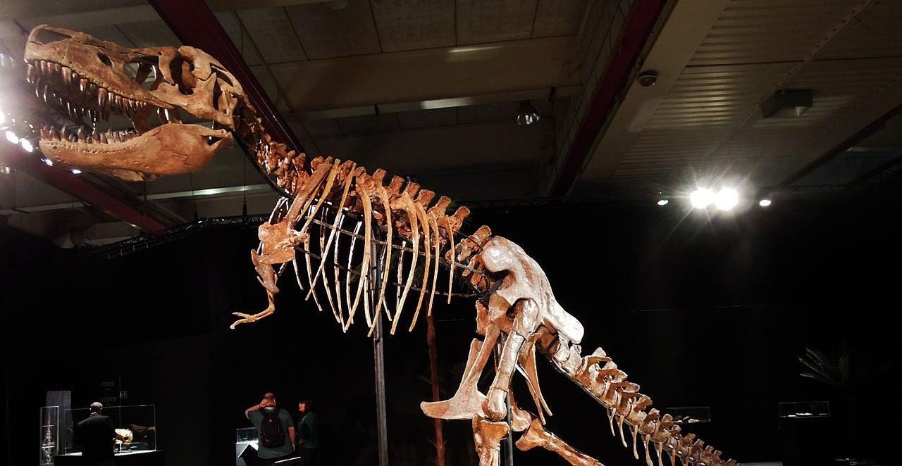 Mongolia Is Getting Its Stolen TyrannosaurusSkull Back