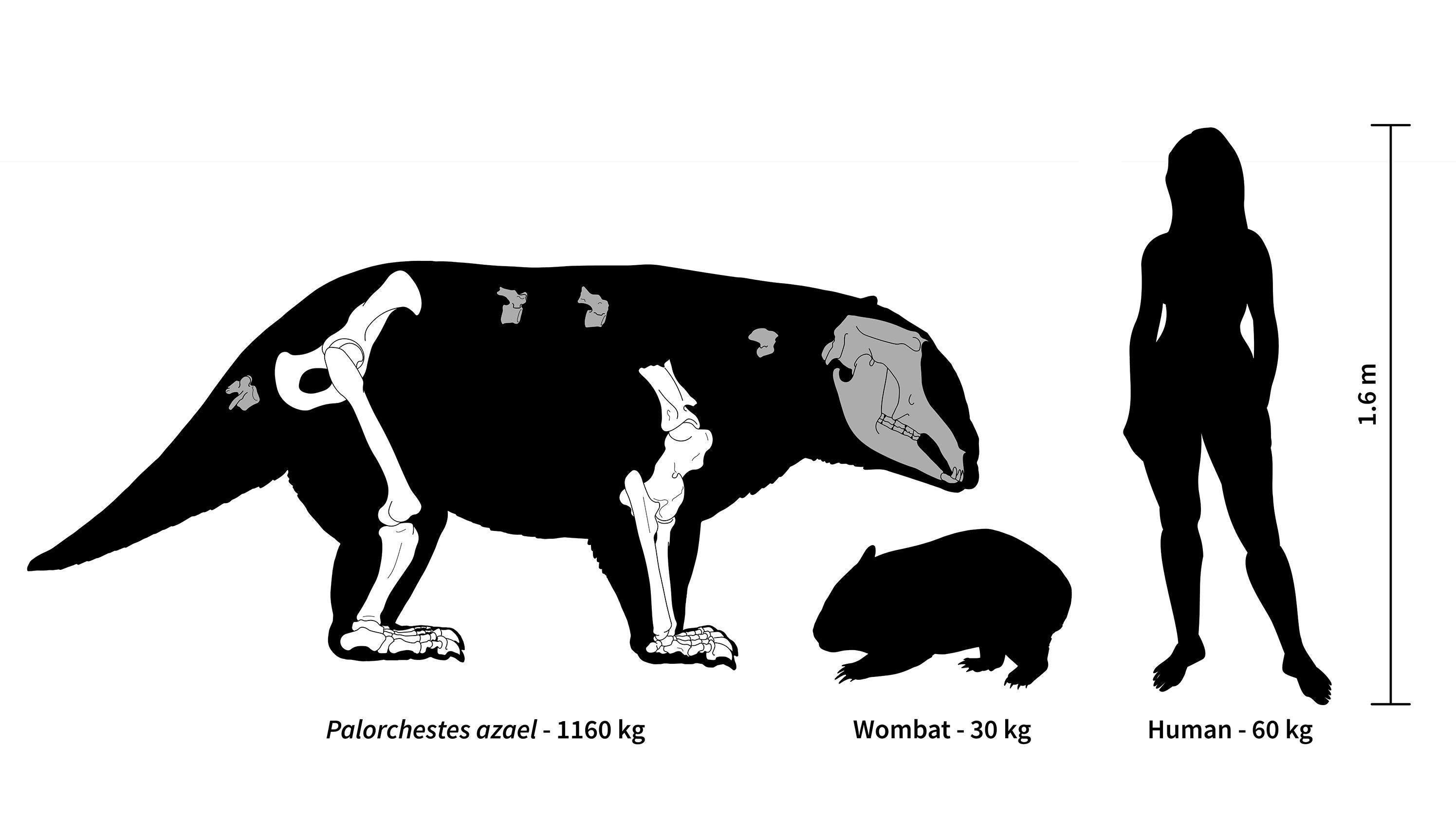 Australia Once Had Giant Marsupials With 'Scimitar-Like' Claws And Extremely Freaky Elbows