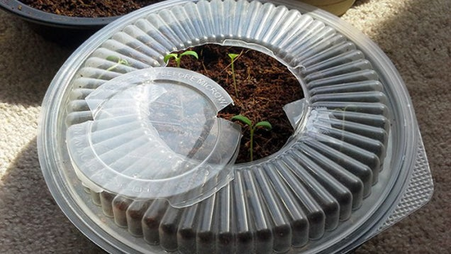 Turn a Takeout Container into a Mini-Greenhouse